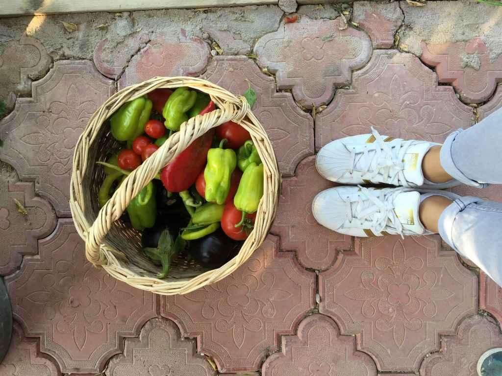 bozcaada-talay-baglari-konukevi-uzum-sarap-otel-sebze