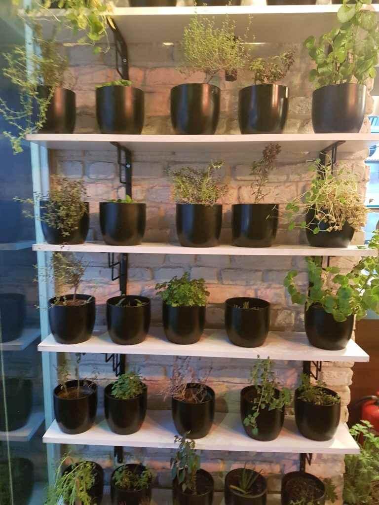 yesempatik-cheftude-makarna-sos-bilgiuniversitesi-bitki